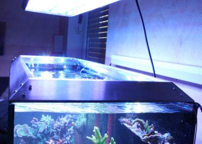 Aquarium-FLC (18)