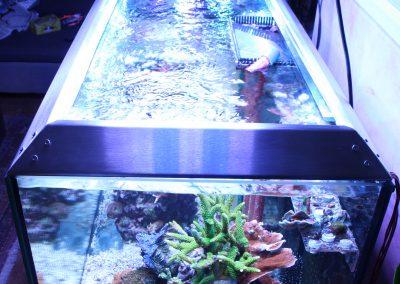 Aquarium-FLC (19)