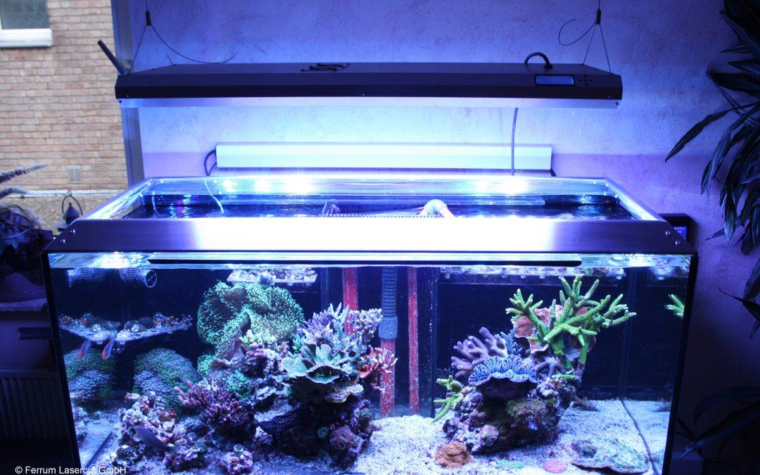 Projekte archiv seite 2 von 3 ferrum lasercut gmbh for Aquarium abdeckung
