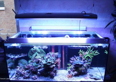 Aquarium-FLC (21)